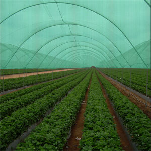 Factory Wholesale Garden and Agricultural Virgin HDPE Sun Shade Net pictures & photos