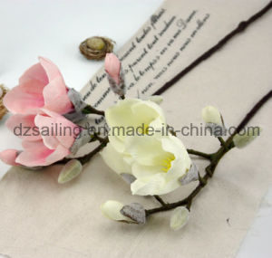 Artificial Magnolia Flower with Hand Feeling Coating for Wedding /Home Decor (SF15336) pictures & photos