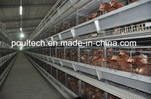 Poul Tech Hot Galvanization Layer Chicken Cage Equipment pictures & photos