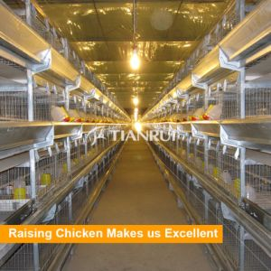Tianrui 3 Tiers Battery Cages for Rearing Pullet pictures & photos