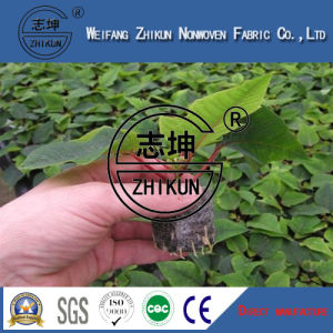 PP Nonwoven Fabric for Agriculture Use pictures & photos