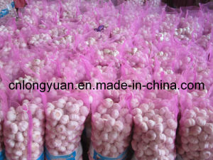 5.0cm Purple White Garlic with Bag Packing pictures & photos