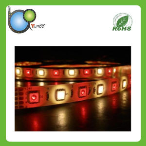Most Popular SMD5050 Flexible RGBW LED Strip pictures & photos