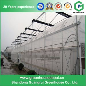 Multi Span Agriculture Plastic Film Vegetable Green Houses pictures & photos