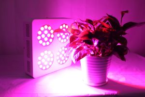 LED Grow Light Gt-103 pictures & photos