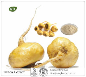 Maca Extract: 10: 1 20: 1 Macamide, Macaenes Maca Powder pictures & photos