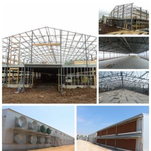 Chicken House with Light Steel Structure pictures & photos