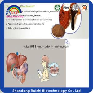 Hot Sell Ganoderma Lucidum Polysaccharides pictures & photos