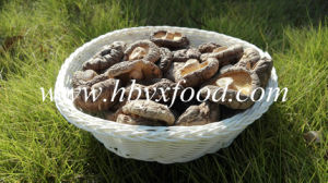Smooth Face Shiitake Mushroom Whole pictures & photos