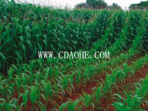 Chengdu Supply EDDHA-Te Fertilizer pictures & photos