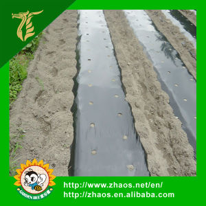 PE Plastic Sheet for Greenhouse pictures & photos