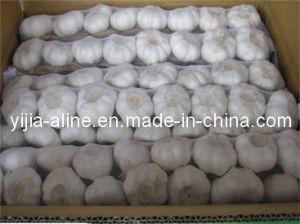 Garlic in Strings (10 x 1kg)