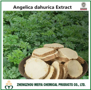 Pure Natural Dahurica Angelica Powder Extract with Imperatorin HPLC pictures & photos