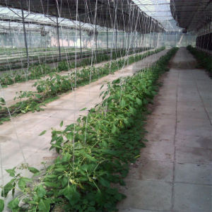 Hydroponics System Greenhouse for Vegetable pictures & photos
