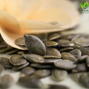 2016 Heilongjiang Gws Pumpkin Seeds AA to Europe
