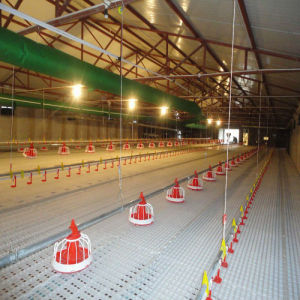 Environmental Controlled Chicken Raise Equipments pictures & photos