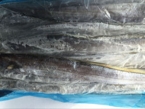 Frozen West Afican Ribbon Fish pictures & photos