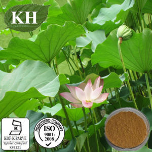Lotus Leaf Extract 2%-98% Nuciferine by HPLC pictures & photos