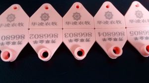 Hot Sale Yellow Lamb TPU Cattle Identification Ear Tags pictures & photos