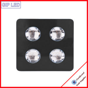 1000W Veg/Flowering Switches Full Spectrum COB LED Grow Lights pictures & photos
