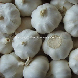 Chinese Fresh Garlic in Bottom Price pictures & photos