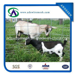 High Quality&Cheap Price Livestock Panels/Feedlot Panles/Hog Panels pictures & photos