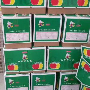Chinese Fresh Qinguan Apple pictures & photos
