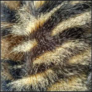 2017 New Design Colorful Luxurious Fake Raccoon Fur Faux Fur Fabric pictures & photos