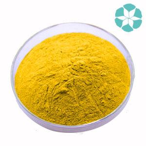 Turmeric Extract / Curcuma Longa Extract / Curcumin pictures & photos