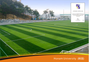 Professional Soccer& Football Artificial Grass (Y50-2) pictures & photos