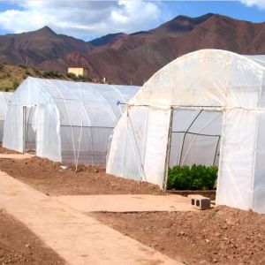 Plastic Film Tunnel Greenhouse for Tomato Growing From China pictures & photos