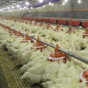 Feeding Silo for Chicken Raising pictures & photos