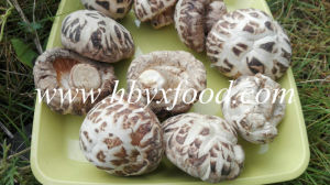 Dried White Flower Shiitake Mushroom Tasty Food pictures & photos