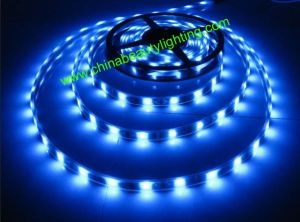 12V/24V DC SMD5050 LED Strip Light LED Light pictures & photos