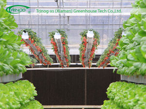 Substrate Growing Systemhydroponic for Strawberry pictures & photos