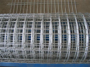 Welded Wire Mesh with Discount Price Is on Hot Sale pictures & photos