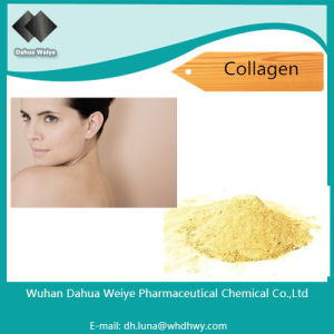 Collagen CAS: 9064-67-9 High Protein Content Bovine Collagen pictures & photos