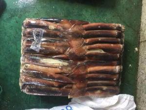 Frozen Squid /Illex Argentine Squid /Squid for Bait pictures & photos