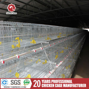 Low Price Broiler Chicks Rate Poultry Farm Chicken Cage pictures & photos