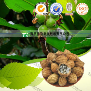 Manufacturer Supply Pure Herbal Medicine and Spice Cardamom pictures & photos