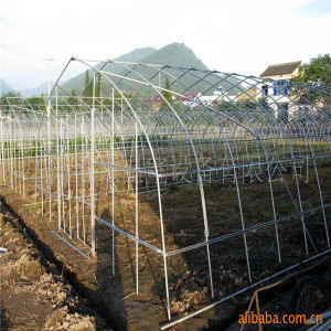 Cheapest Galvanized Steel Tunnel Greenhouse with Plastic Film and Fly Net pictures & photos