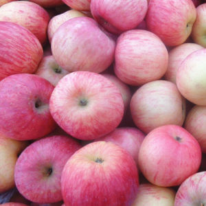 Delicious Fresh Red FUJI Apple Good Quality pictures & photos