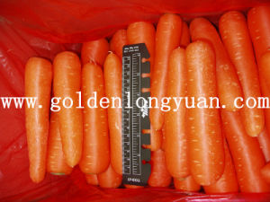 Bright Red Color Fresh New Crop Carrot pictures & photos