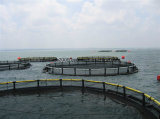 Anti-Wave Aquaculture Deep Sea Opening Fishing Net Cage pictures & photos