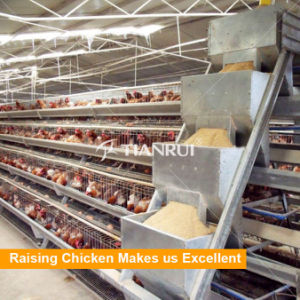 Best Build Durable Chicken Poultry Feeding Equipments pictures & photos