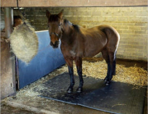 Horse Rubber Mat Animal Rubber Mat Cow Horse Mat pictures & photos