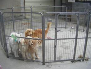 Hot Sale Manufacturer Supply Dog Pen/Pet Playpen pictures & photos