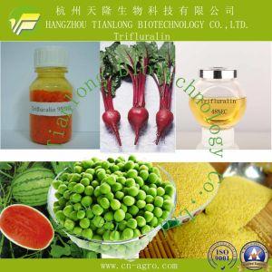 Good Quality Herbicides Trifluralin (96%TC, 48%EC) pictures & photos
