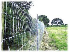 High Tensile Galvanized Cattle Mesh Fence/Field Fence/Cow Fence pictures & photos