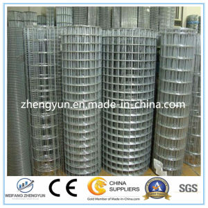 Made in China Electro Galvanized Welded Wire Mesh pictures & photos